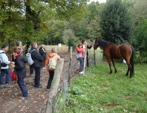 Randonnée du 12 octobre 2014 – de Chamarande à Saint-Sulpice de Favières